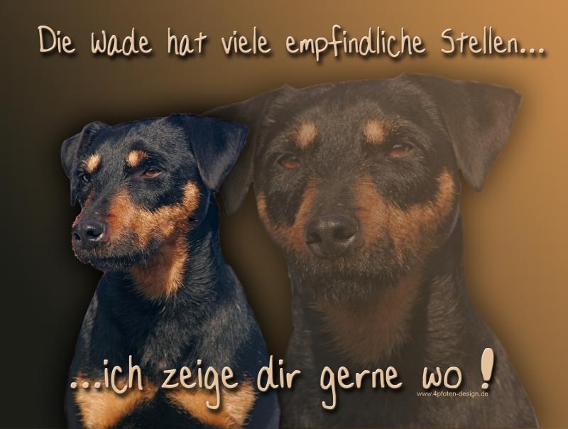 Hundewarnschild Deutscher Jagdterrier 1